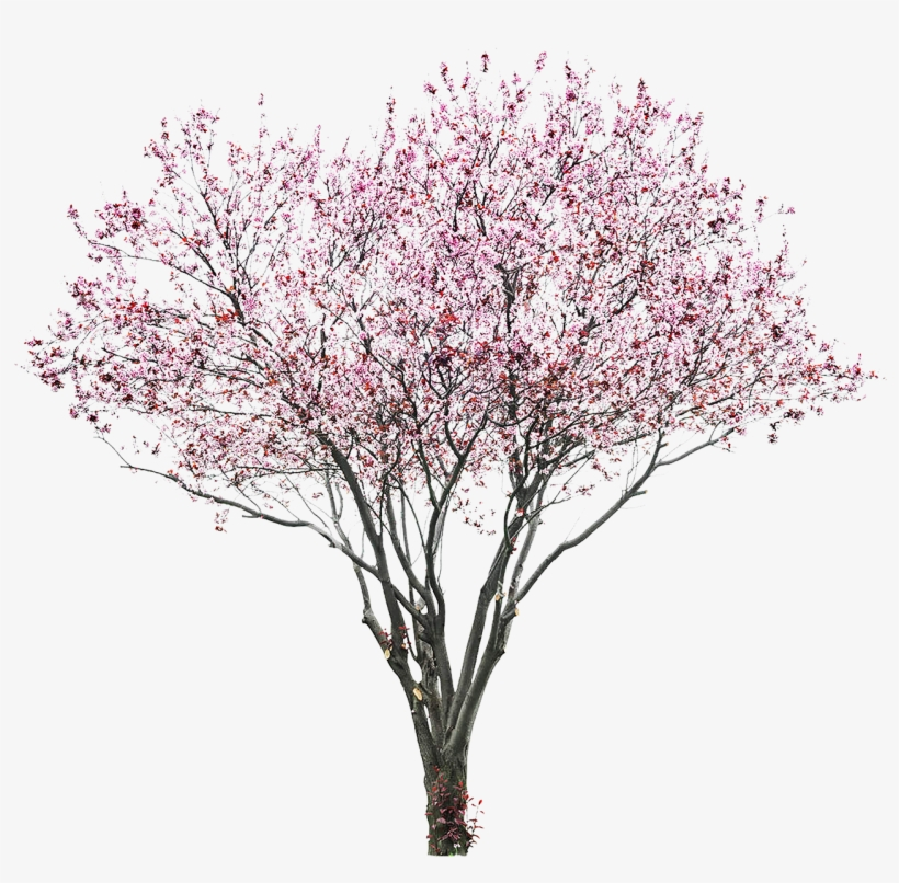 Tree Flower Pink.