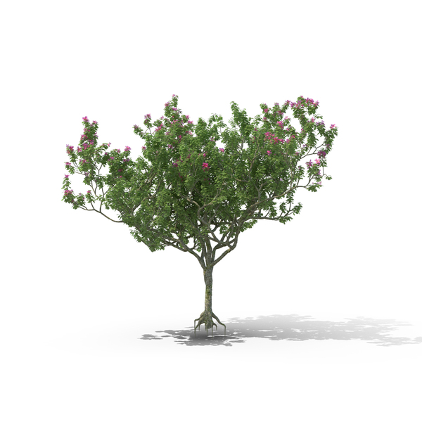 Flowering Tree PNG Images & PSDs for Download.