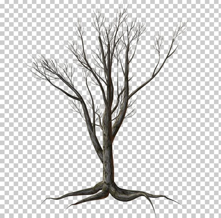 Tree Shrub Kousa Dogwood PNG, Clipart, Black And White, Branch.