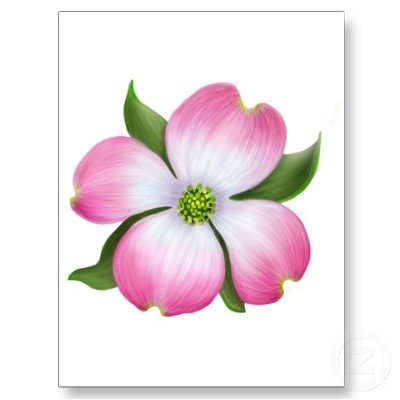 1000+ images about DOGWOOD on Pinterest.