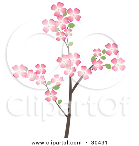 Clipart Illustration of a Flowering Dogwood Tree Branch Covered In.