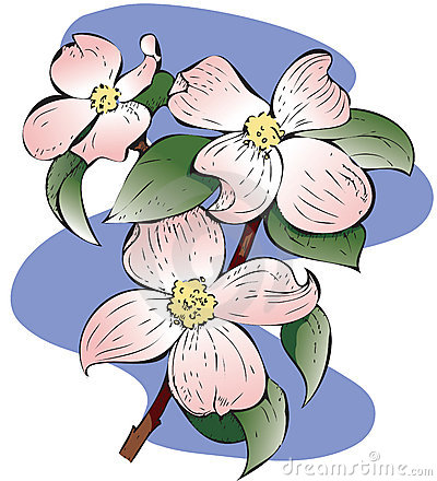 Virginia Dogwood Tree Clipart.