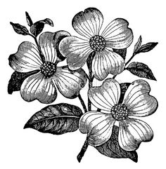 Dogwood flower clipart.