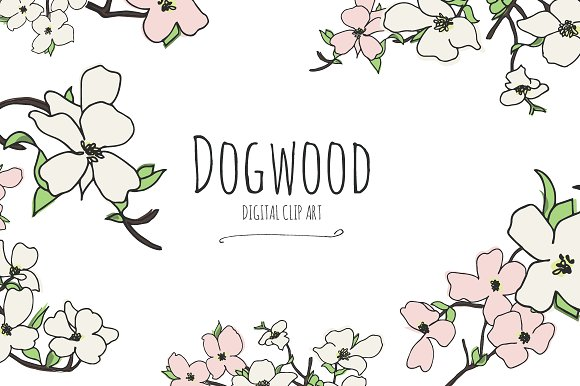 Dogwood.