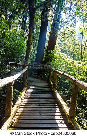 Stock Image of Ang Ka Nature Trail at Doi Inthanon National Park.