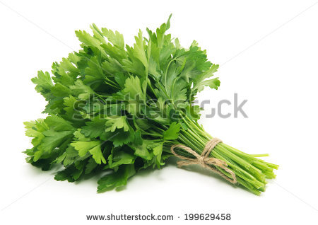 Parsley free stock photos download (35 Free stock photos) for.