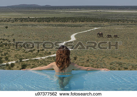 Stock Photo of Woman watching elephants from infinity pool at.