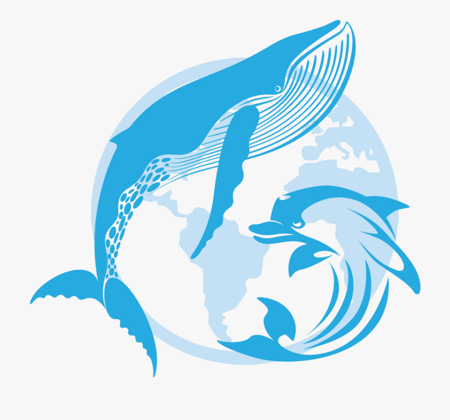 Dolphin clipart dolphin splash, Dolphin dolphin splash.