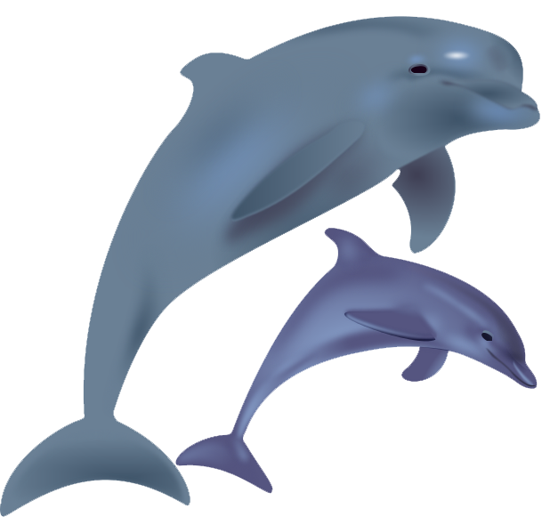 Free Dolphin PNG Transparent Images, Download Free Clip Art, Free.