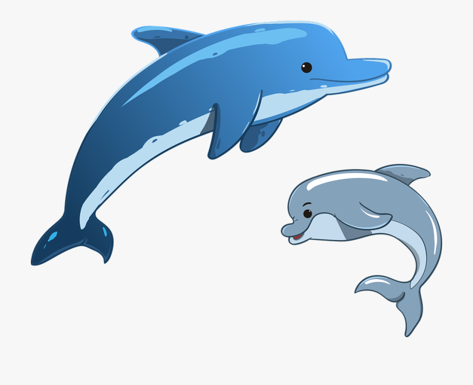 Dolphins Clipart.