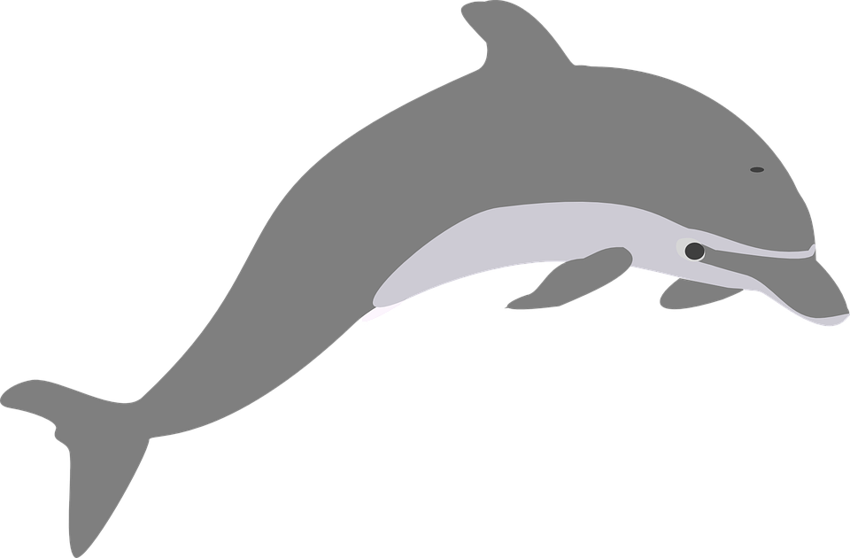 Dolphin PNG image free download.