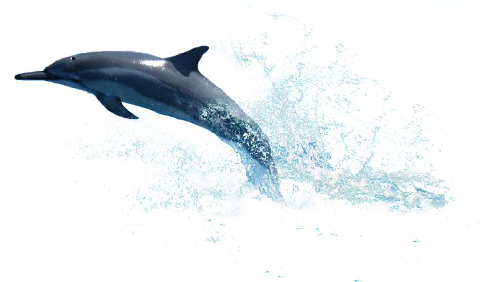 Dolphin jumping out of water images clipart images gallery for free.