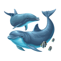 Download Dolphin Free PNG photo images and clipart.