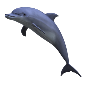 Dolphin HD PNG Transparent Dolphin HD.PNG Images..