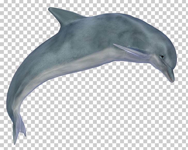 Dolphin PNG, Clipart, Dolphin Free PNG Download.