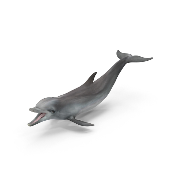 Dolphin PNG Images & PSDs for Download.