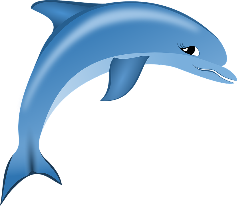 Dolphin PNG Free Image Download.