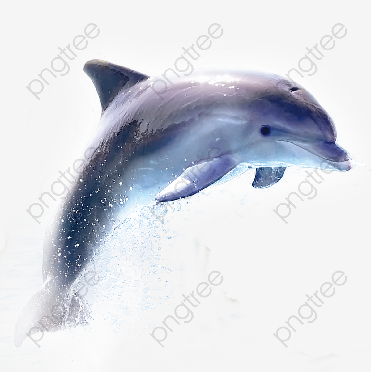 Dolphin, Dolphin Clipart, Blue PNG Transparent Image and Clipart for.