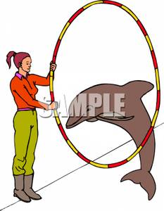 Dolphin show clipart #6