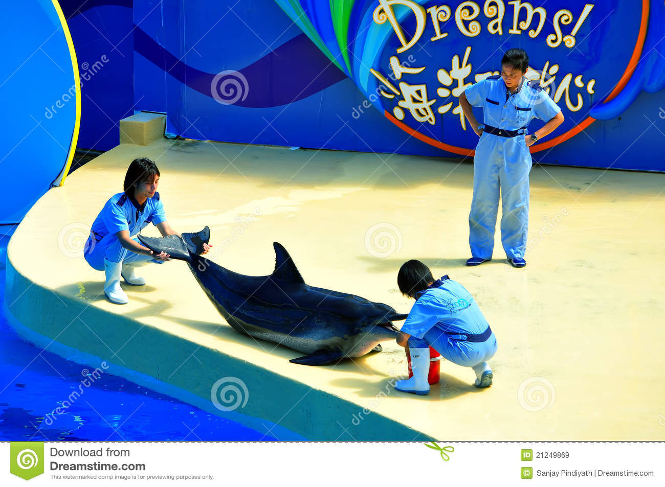 Dolphin Show Editorial Photography.