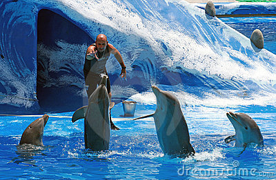 Trainer Feeding Dolphins In Water Park Pool Editorial Stock Image.