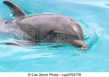 Pictures of swimming dolphin.