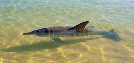 Blowhole Images & Stock Pictures. Royalty Free Blowhole Photos And.