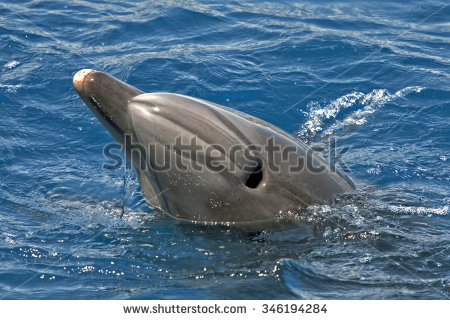 Blowhole Stock Images, Royalty.