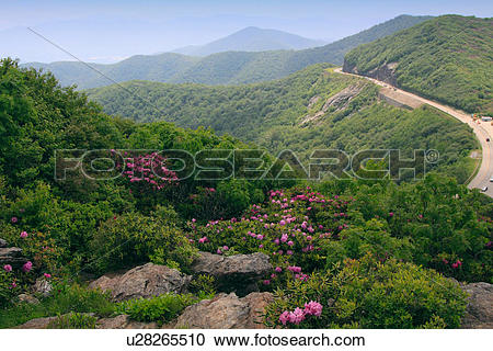 Stock Photography of craggy dome gardens catawba purple blue ridge.