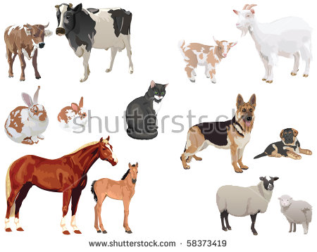 Domestic Animals Stock Photos, Royalty.