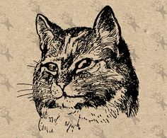 vintage cat clipart cat teaching kittens with globe.