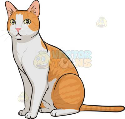cat Cartoon Clipart.