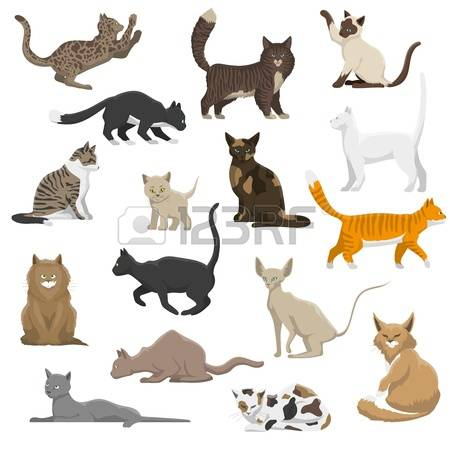 26,878 Domestic Cat Stock Illustrations, Cliparts And Royalty Free.