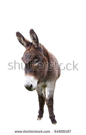 Donkey Head Stock Photos, Royalty.