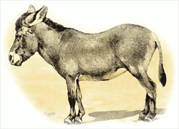 Free Donkey Clipart Pictures.