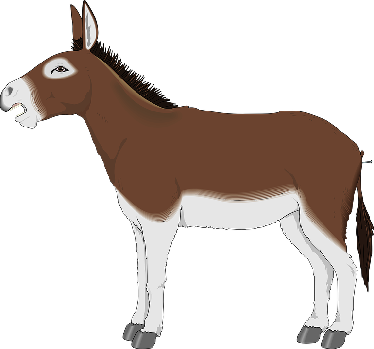 Free vector graphic: Donkey, Animal, Mammal, Mule.