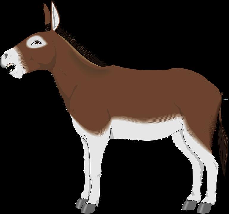 Free vector graphic: Donkey, Animal, Mammal, Mule.