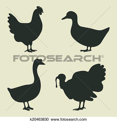 Clipart of domestic fowl icon k20463830.