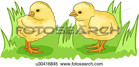 Clipart of chicken, vertebrate, fowl, birds, bird, domestic animal.