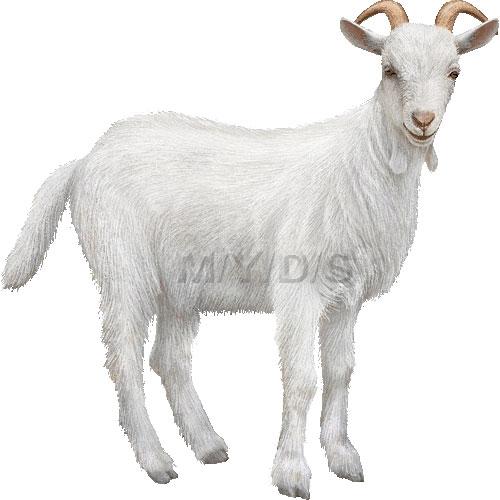Domestic Goat clipart graphics (Free clip art.
