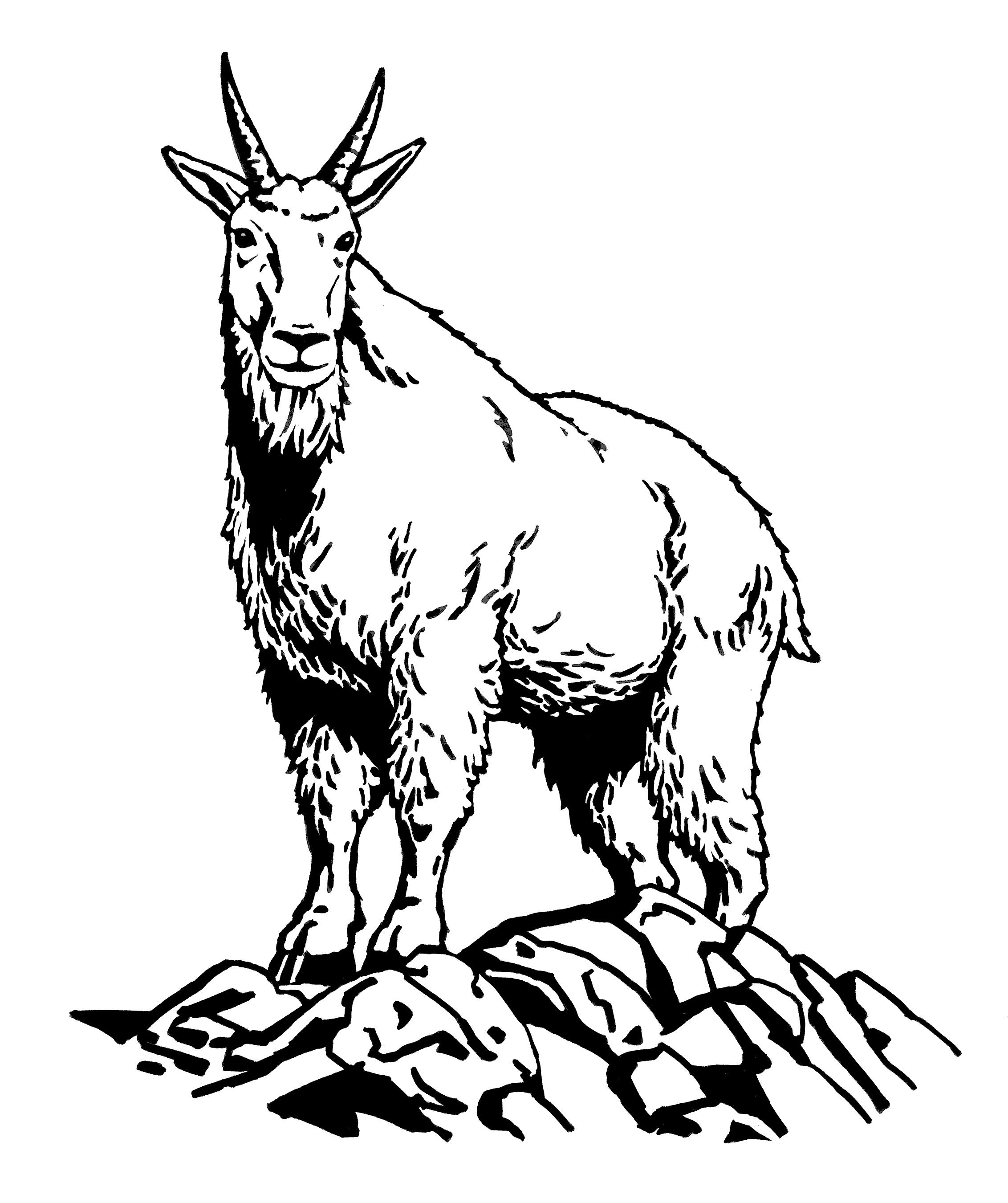 Mountain goat head clipart.