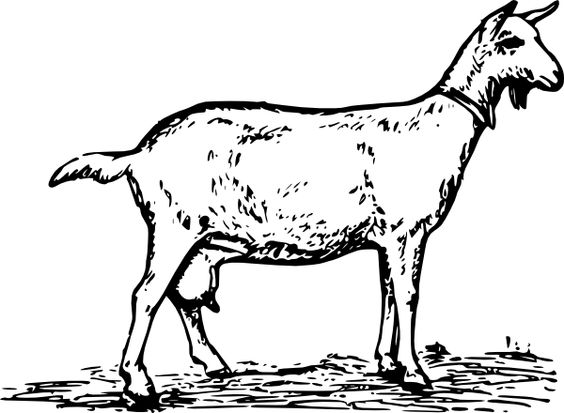 Simple Goat Drawing.