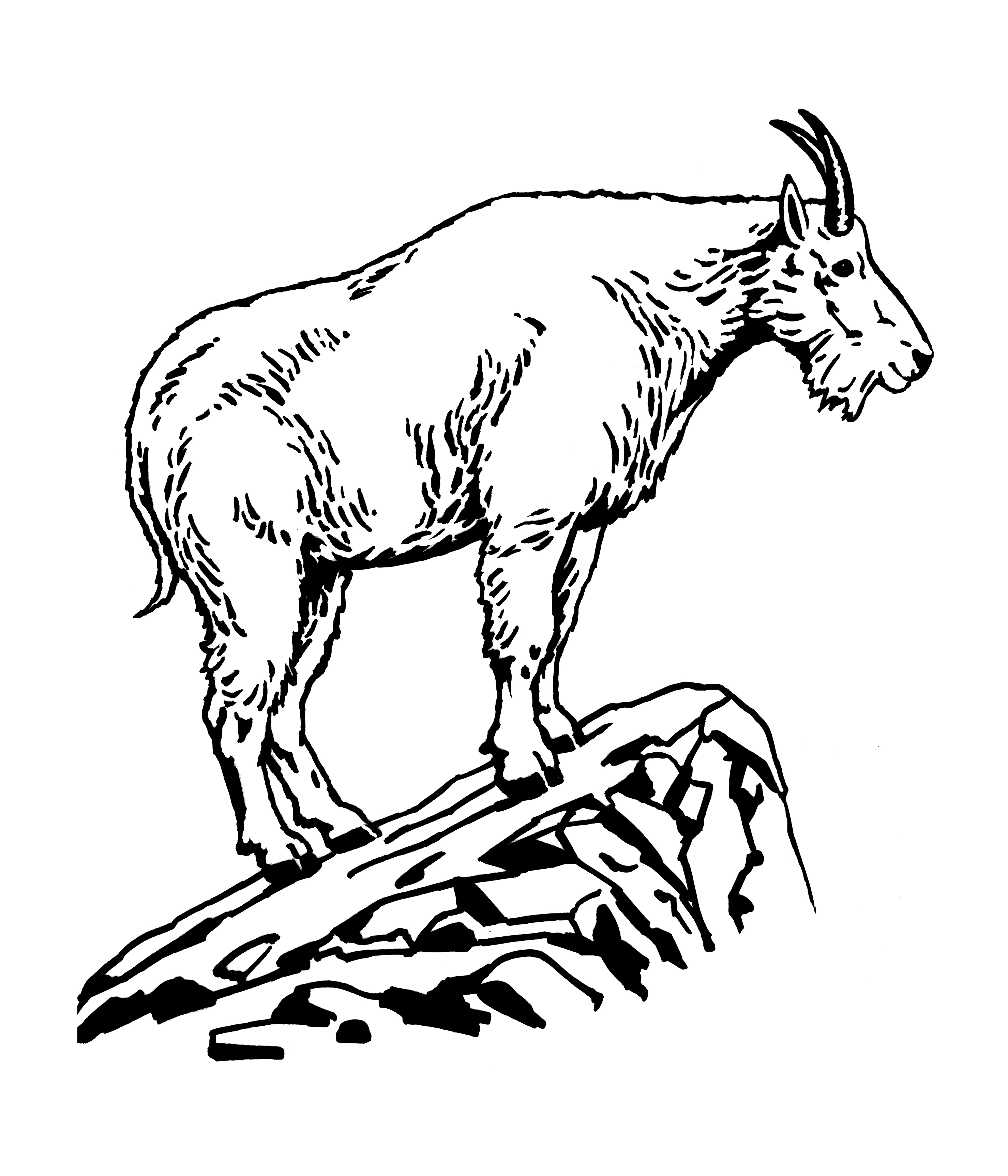 Goat Black And White Clipart.