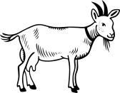 Goat Clipart Black And White 10296515 Goat Domestic On White.