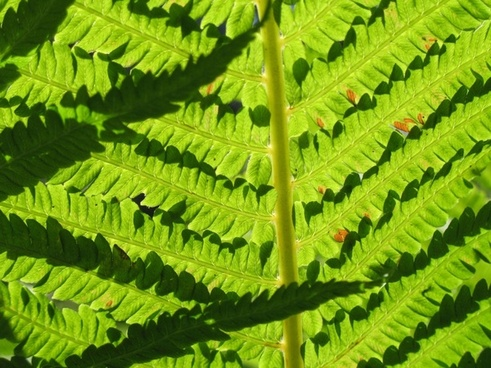 Nz fern free stock photos download (130 Free stock photos) for.