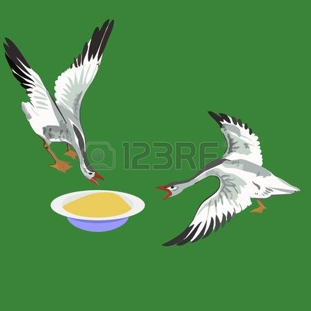 Domestic Goose Stock Vector Illustration And Royalty Free Domestic.