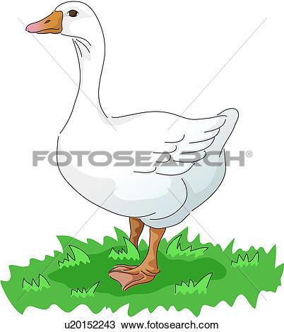 Clipart of domestic animal, vertebrate, goose, birds, bird, icon.
