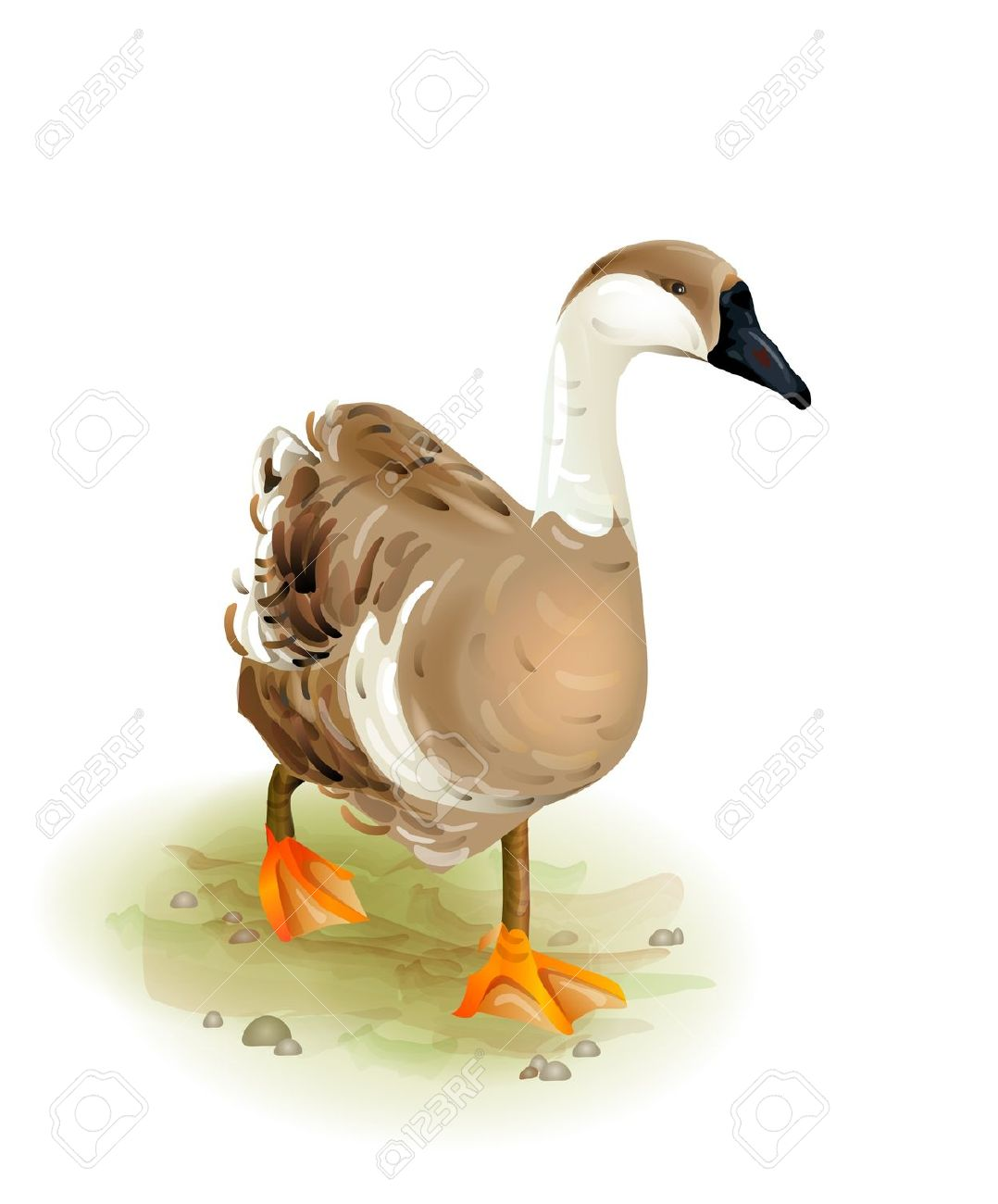 Walking Domestic Goose.Watercolor Style Royalty Free Cliparts.