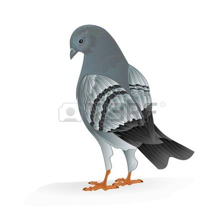 133 Carrier Pigeons Stock Vector Illustration And Royalty Free.