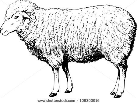 Sheep realistic clipart.